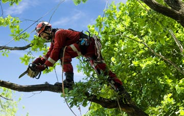 find trusted rated Abernyte tree surgeons in Perth And Kinross
