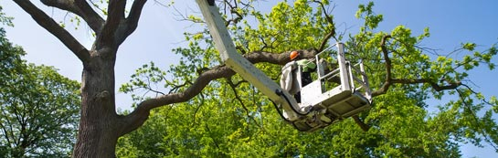 Abernyte tree surgery services