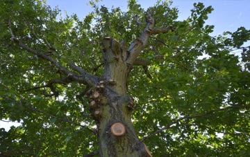 what is Abernyte tree surgery?
